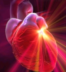 The Functions of the Heart