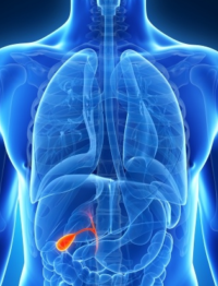 The Functions of the Gall Bladder