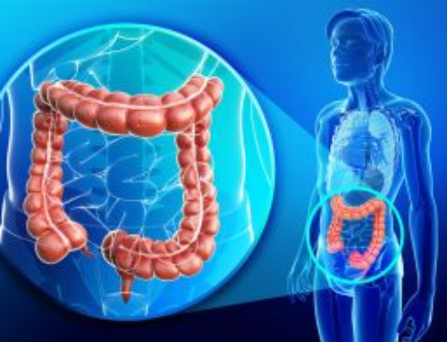 The Functions of the Large Intestine