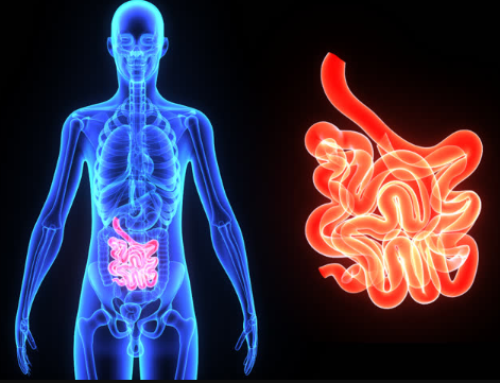 The Functions of the Small Intestine