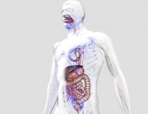 Women's Physiology PT 3: The Internal Organs
